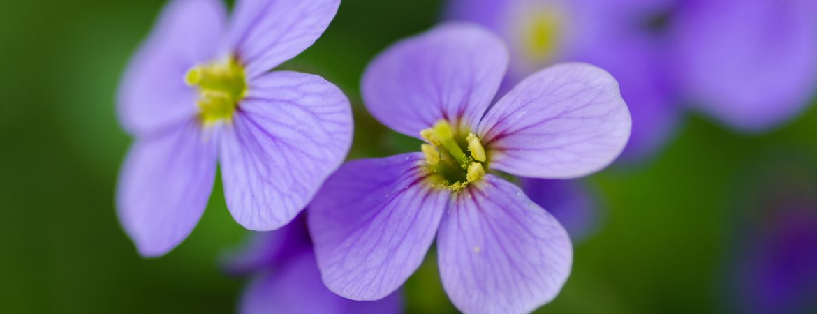purple flowers to leave you feeling healthy relaxed and revitatlised